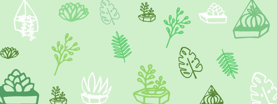 Jungle Jars